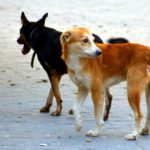 Александр Токарев потребовал изменить ситуацию с отловом бездомных животных